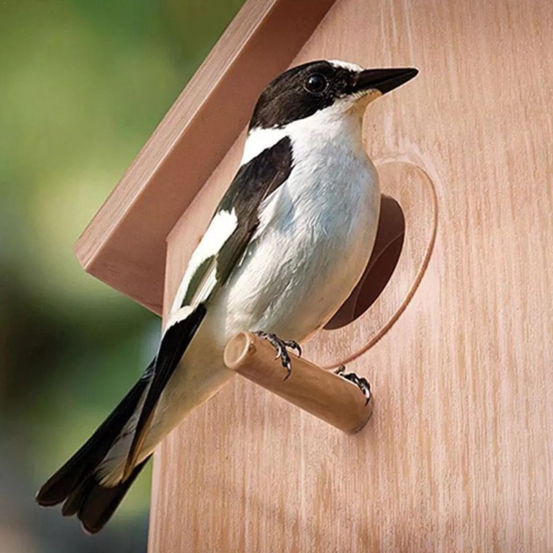 Wood Bird Nests Outdoor Suction Cup Visible Bird Home Garden Window Birdhouse Dispenser Food Container House Bird Feeder tools